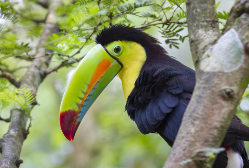 Volunteer in Costa Rica Opportunities Information